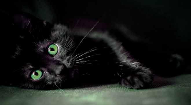 buio nero micio foto